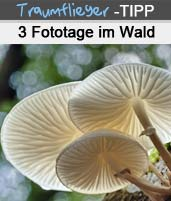 Panorama-Pilzfotografie - Fototipps zu Waldfotografie