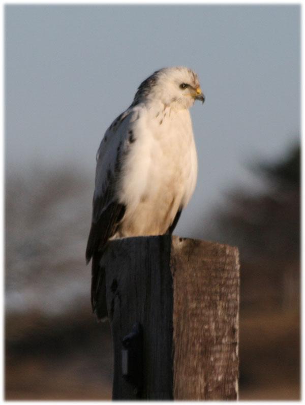 vögel die in deutschland überwintern