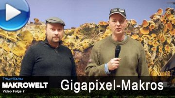 Video: gigantische Sch�rfe via Gigapixel-Makro!