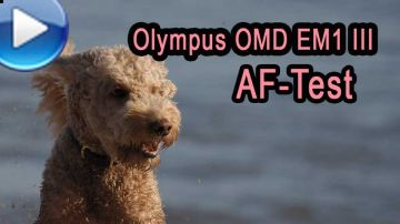 Olympus OMD EM1 Mark 3 - Autofokus-Test am Strand