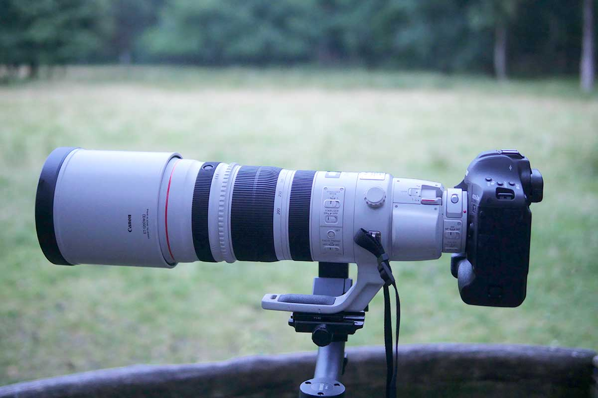 Canon 200 400mm 4l is usm im test traumflieger.de