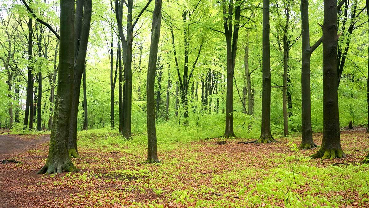 Das Bild Hängt Schief Warum Bäume Gerade Wachsen Traumfliegerde
